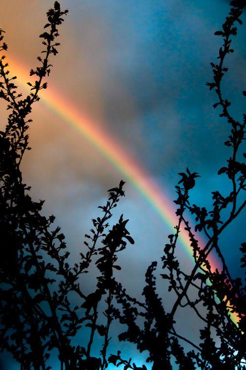 """Toda vez que o arco-íris estiver nas nuvens, olharei para ele e me lembrarei da aliança eterna entre Deus e todos os seres vivos de todas as espécies que vivem na terra"""". Gênesis 9:16"""