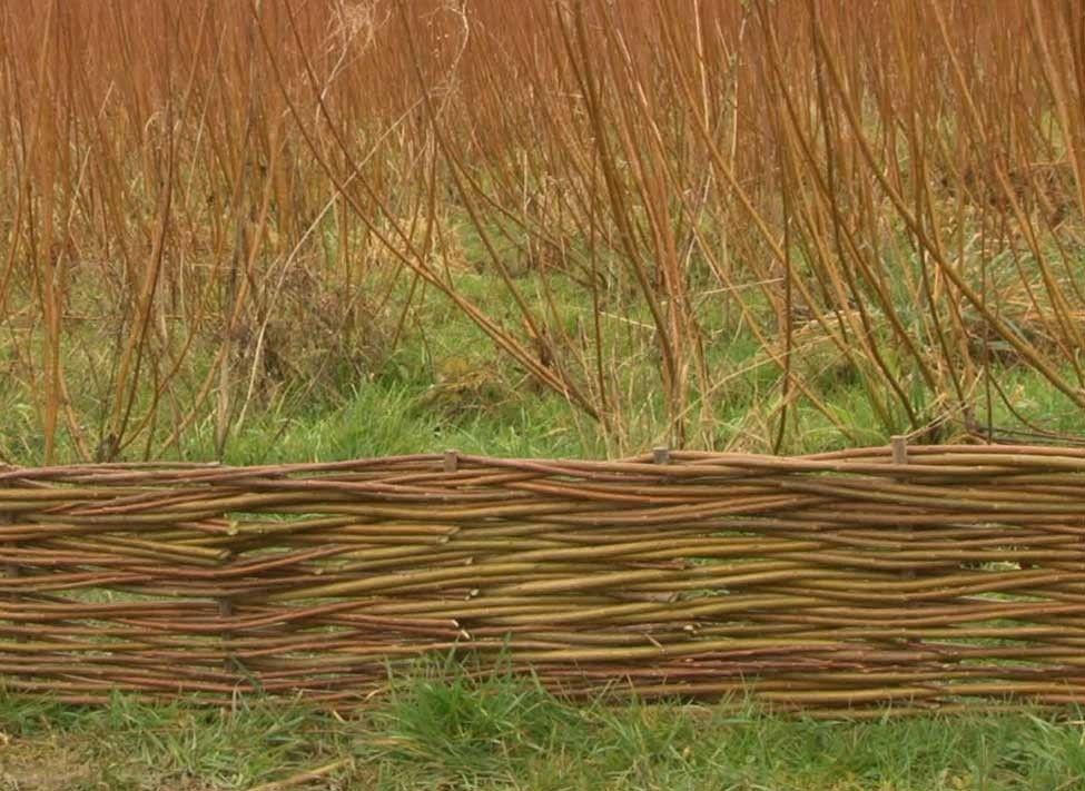 Comment tresser une bordure en osier solide   Nature landscape ...