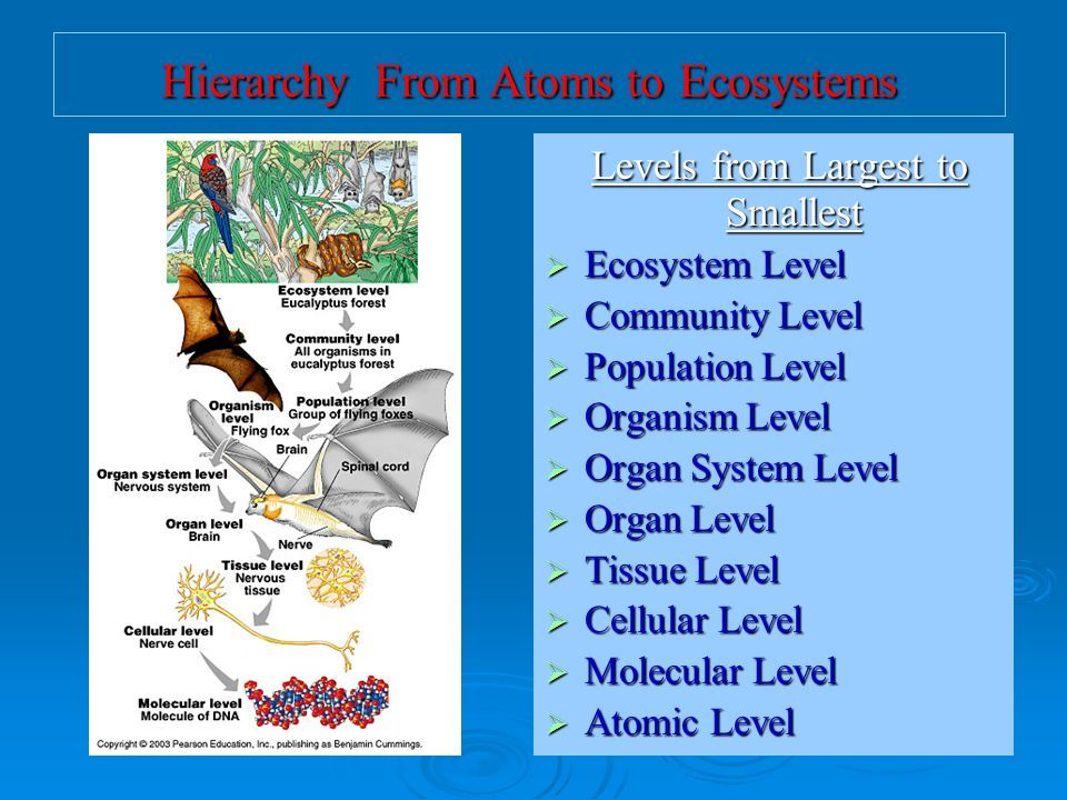Nervous System Organs By M Hodge On Ecology Ecosystem