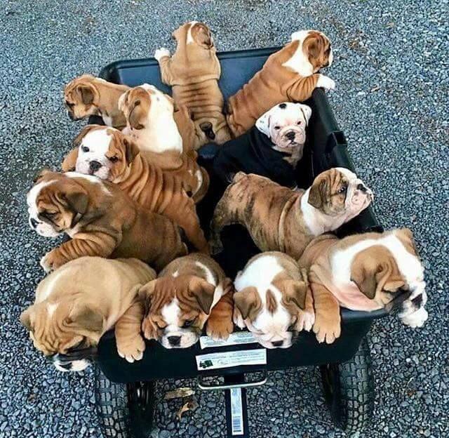 Pin By Kallia Miliaraki On True Love Bulldog Puppies French Bulldog Puppies Cute Animals