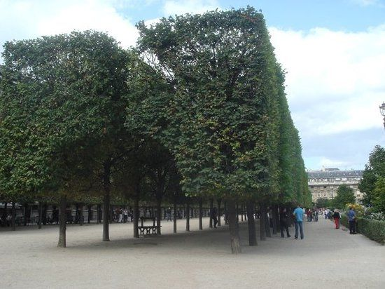 Jardin Du Palais Royal Trip Advisor Palais Royal Paris