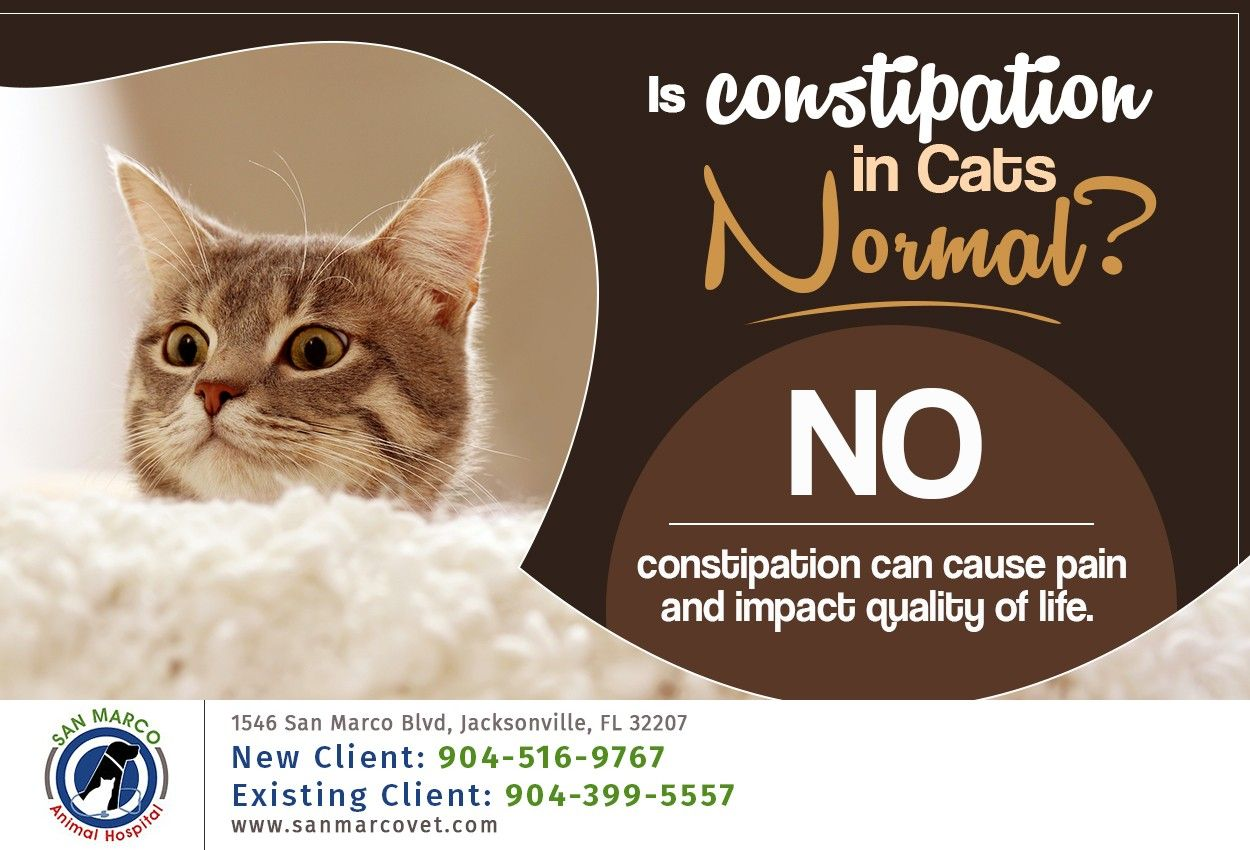 Consider Feeding Your Cat Canned Food To Increase Water Intake And Always Give Us A Call At 904 516 9767 If You Have An In 2020 Service Animal Cats Veterinary Hospital