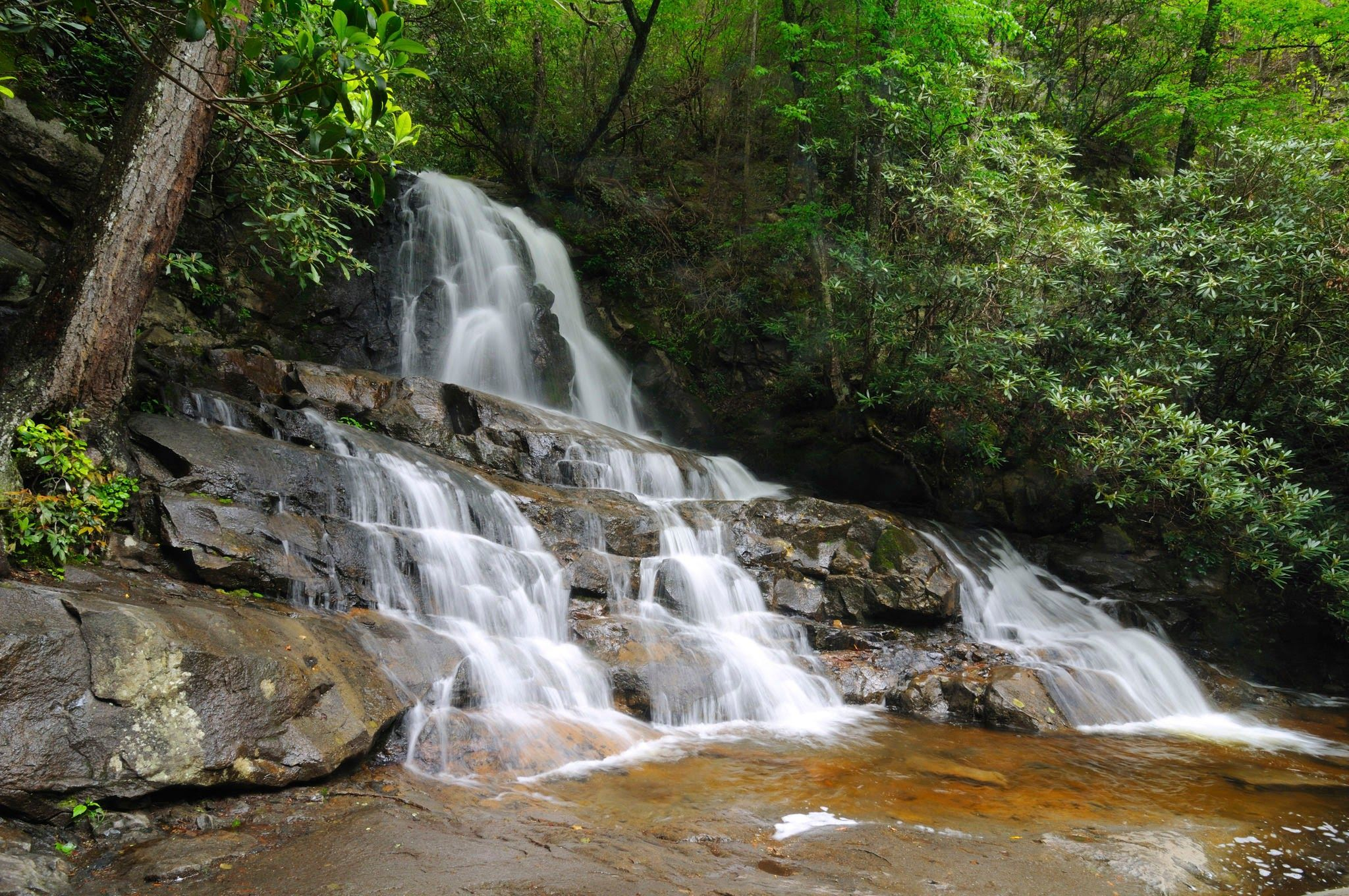 Great Smoky Mountains Things To Do In 2020 Smoky Mountain Trails Smoky Mountains Smoky Mountains Hiking