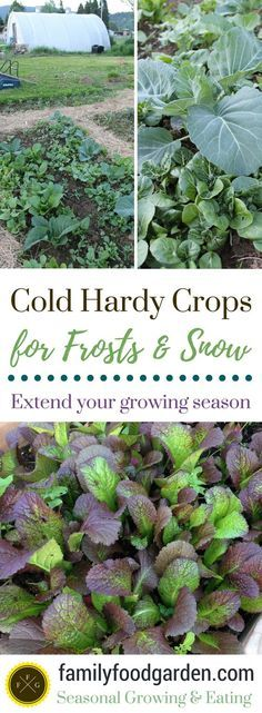 Crops that Can Handle Frosts & Snow | Winter In the Garden ...