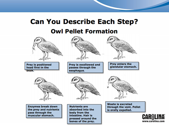 Here 39 S A Nice Series Of Slides On Owl Pellet Study Owls
