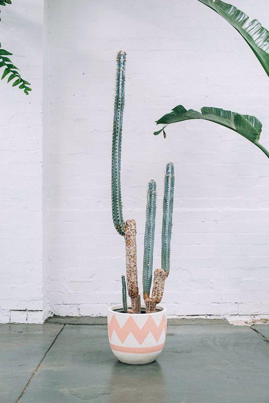 Simply Styling   Plantas, Cactus y Suculentas