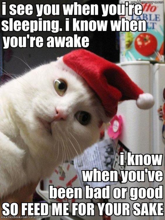 Christmas Kitty and like OMG! get some yourself some ...