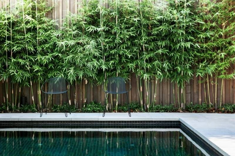 Gracilis Bamboo Plants Slender Weavers Bamboo Plants Gumtree Australia Newcastle Area Newcastl Bamboo Garden Bamboo Landscape Backyard Pool Landscaping