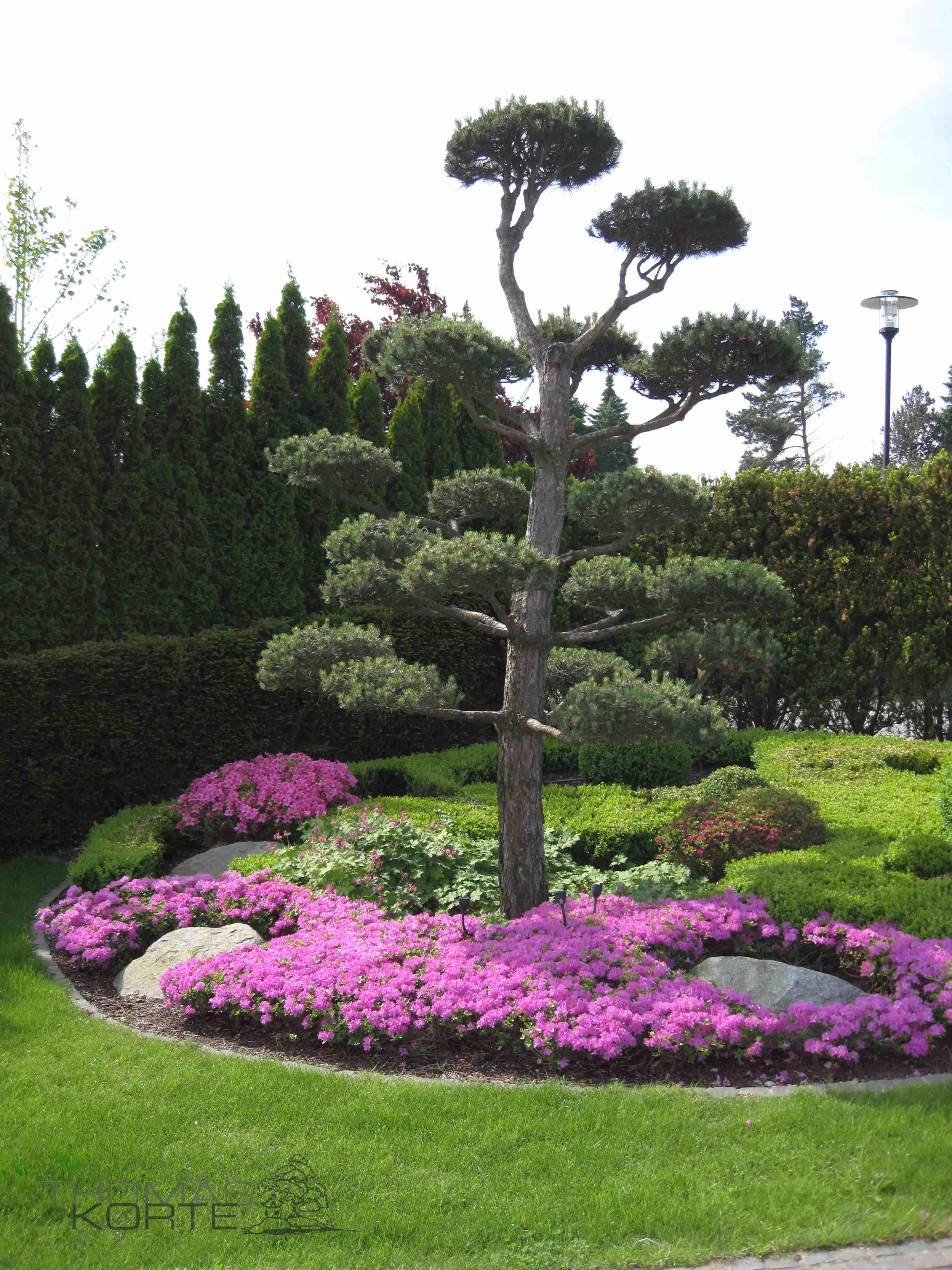 Notter Japan Garten Pius Notter Gartengestaltung Japanischer Garten Garten Garten Landschaftsbau