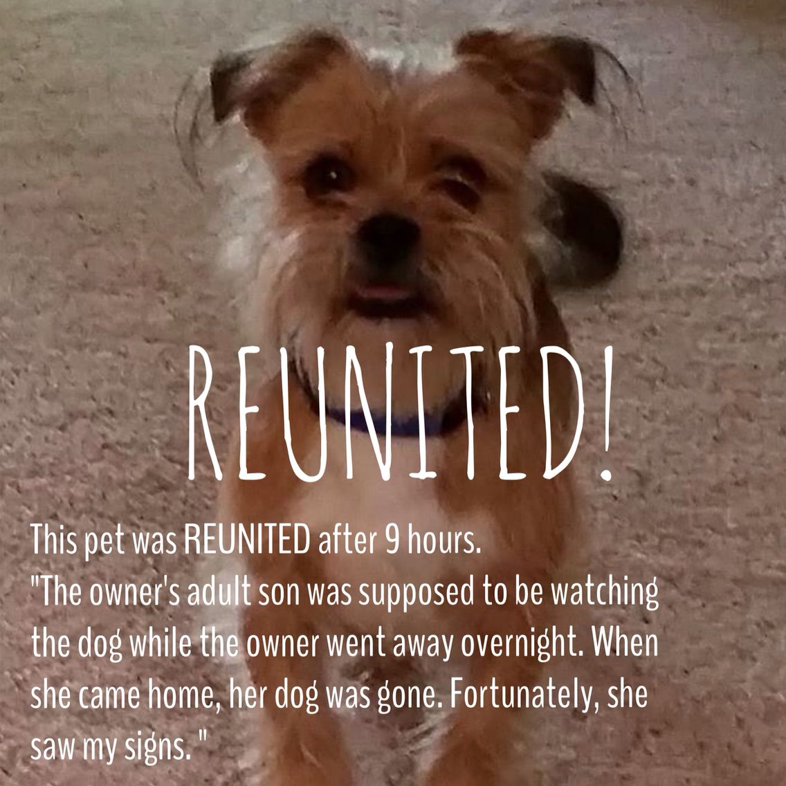REUNITED! This pet was REUNITED after 9 hours  Found on: Jun