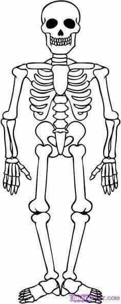 Pin De Sool Rey En Personales Dibujo Del Esqueleto Humano Esqueleto Humano Para Dibujar Esqueleto Humano Para Ninos