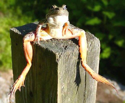 Pause Lustige Tiere Niedliche Frosche Lustige Frosche