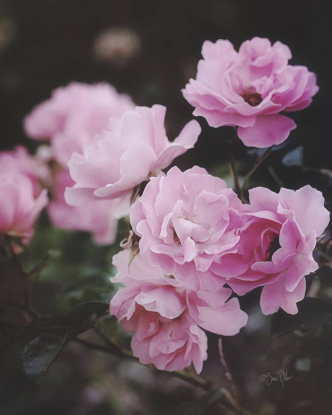 ıɛ ɬơƖɖ ყơų  ɬɧąɬʂ ῳɧơ ı ąɱ             #ros #rosor #rose #roses #fleurs #blommor #flowersandmacro #flowers #top_macro #9vaga_rose9 #9vaga9 #9vaga_naturemiracles9 #heart_imprint_vip #global_ladies #ig_sweden #ip_blossoms #ig_today #artistry_vision #everything_imaginable #ig_eternity #ig_myshot #ig_myshots #ig_flowers #macro_creative_pictures #macro_brilliance #raw_flowers #tv_depthoffield #tv_flowers #macro_nature_spirit