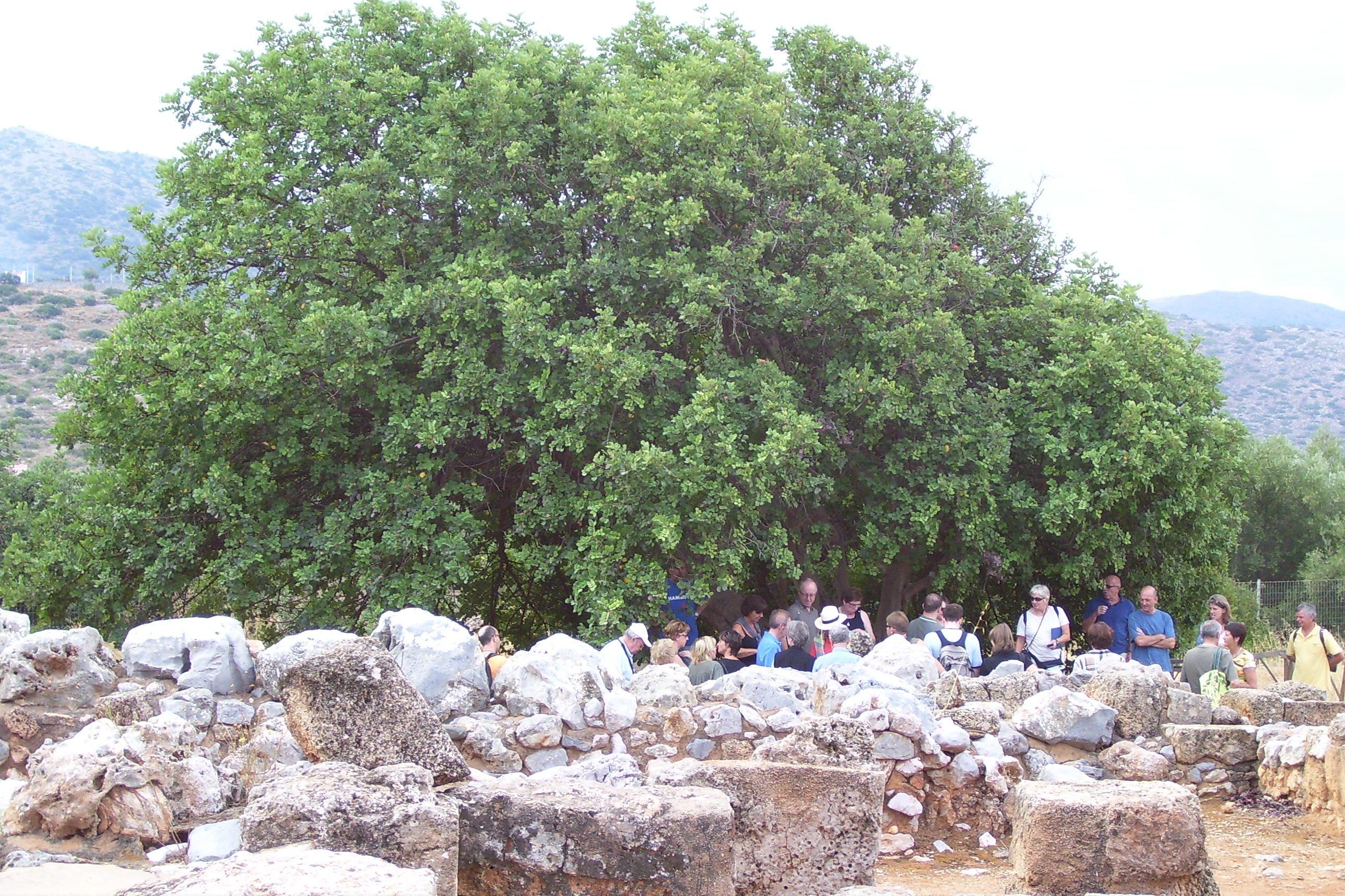 opgravingen Minoïsch paleis Malia kreta