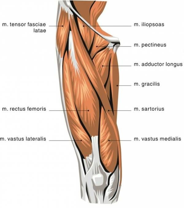 Two-Jointed Muscles of the Lower Body: What They Are and How to ...