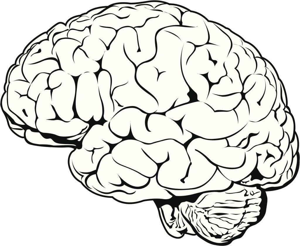 Simple Drawing Of Brain Brain Clipartsco | Çizim, Sanat