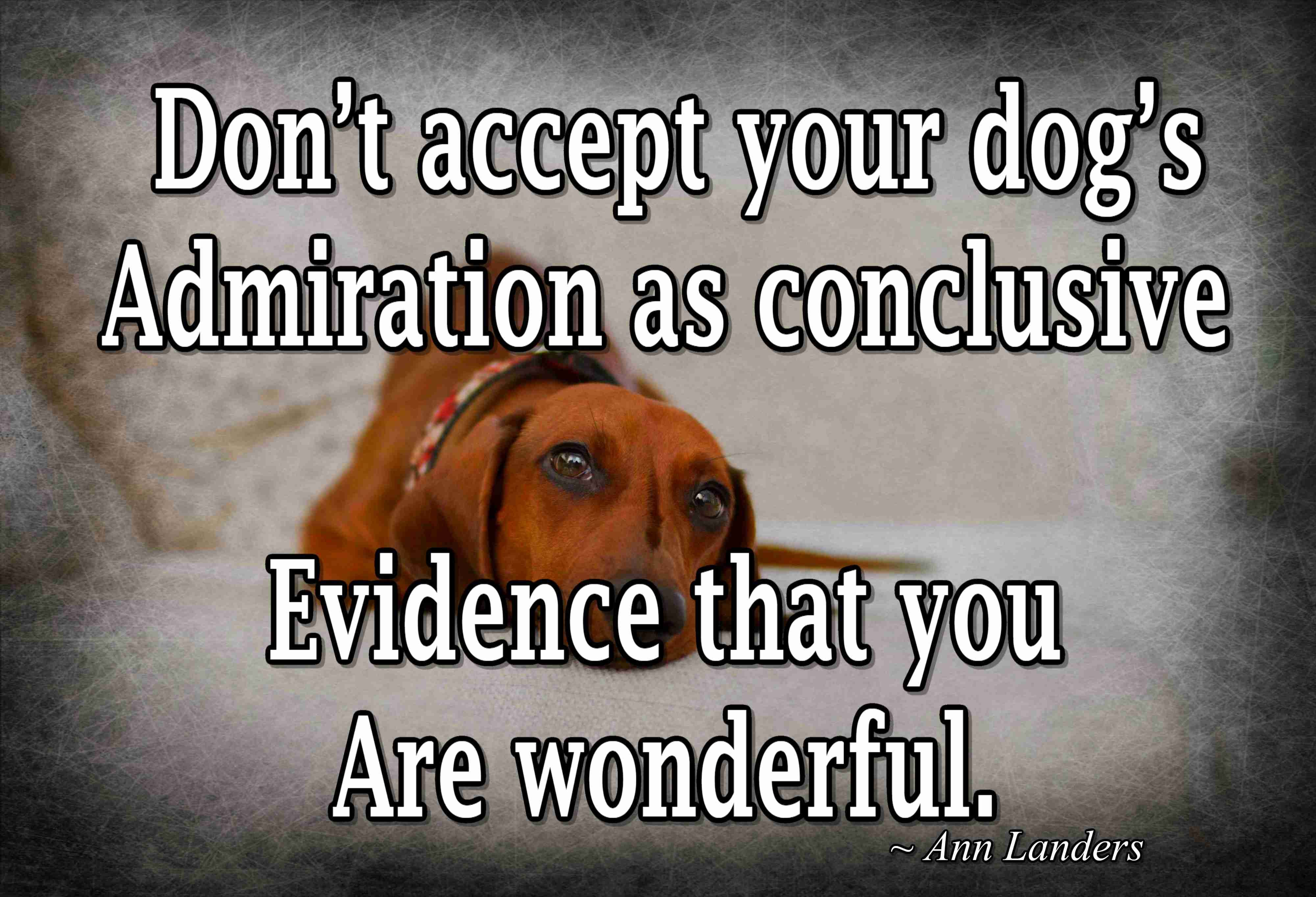 Don T Accept Your Dog S Admiration As Conclusive Evidence That You Are Wonderful Dogs Pets In 2020 You Are Wonderful Dogs