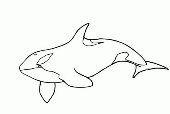 killer whale coloring pages - photo#30