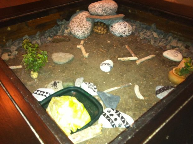 Tortoise Coffee Table Habitat