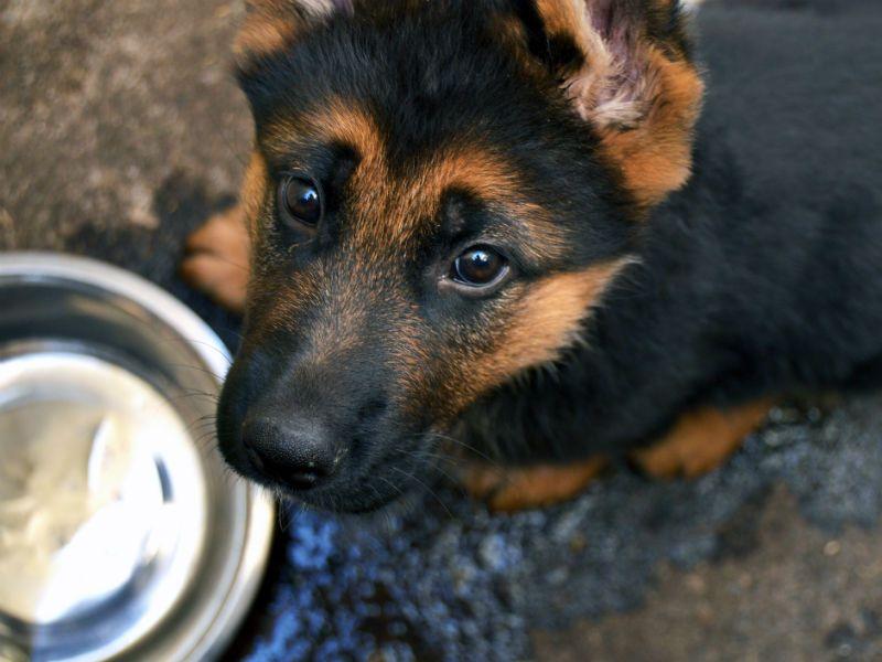 Can Dogs Drink Milk Drink Milk Dog Milk Dogs