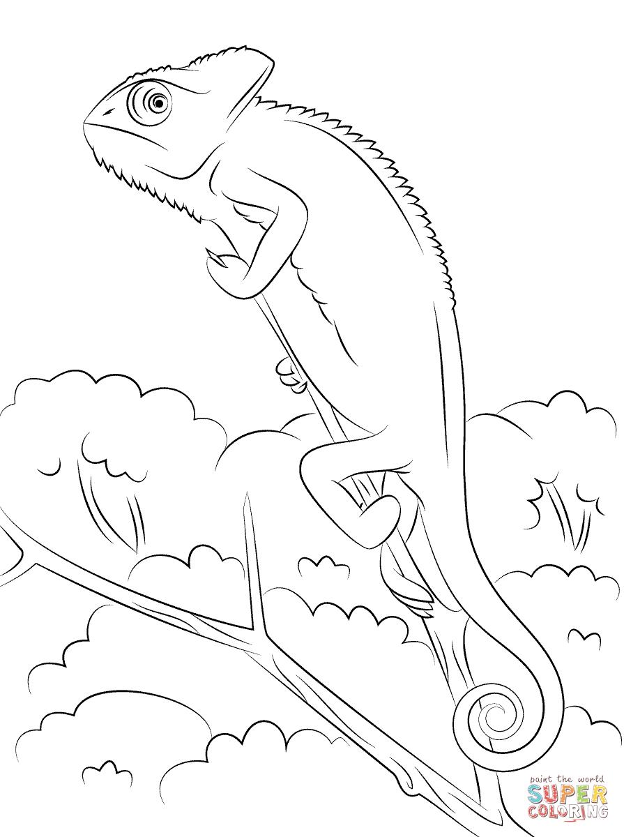 Chameleon Line Art Google Haku Coloring Pages Veiled Chameleon Free Coloring Pages