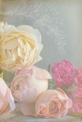 Still life of David Austin roses 'Lady Emma Hamilton' and 'Graham Thomas' with polyantha rose 'The Lovely Fairy'|© 2011 Georgianna Lane