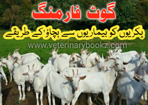 Goat Farming Business in Pakistan and India in 2020 Goat