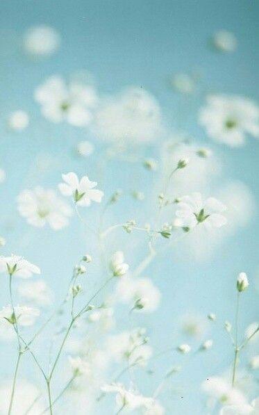 Soft Summer Flowers Photography Flower Wallpaper Beautiful Flowers