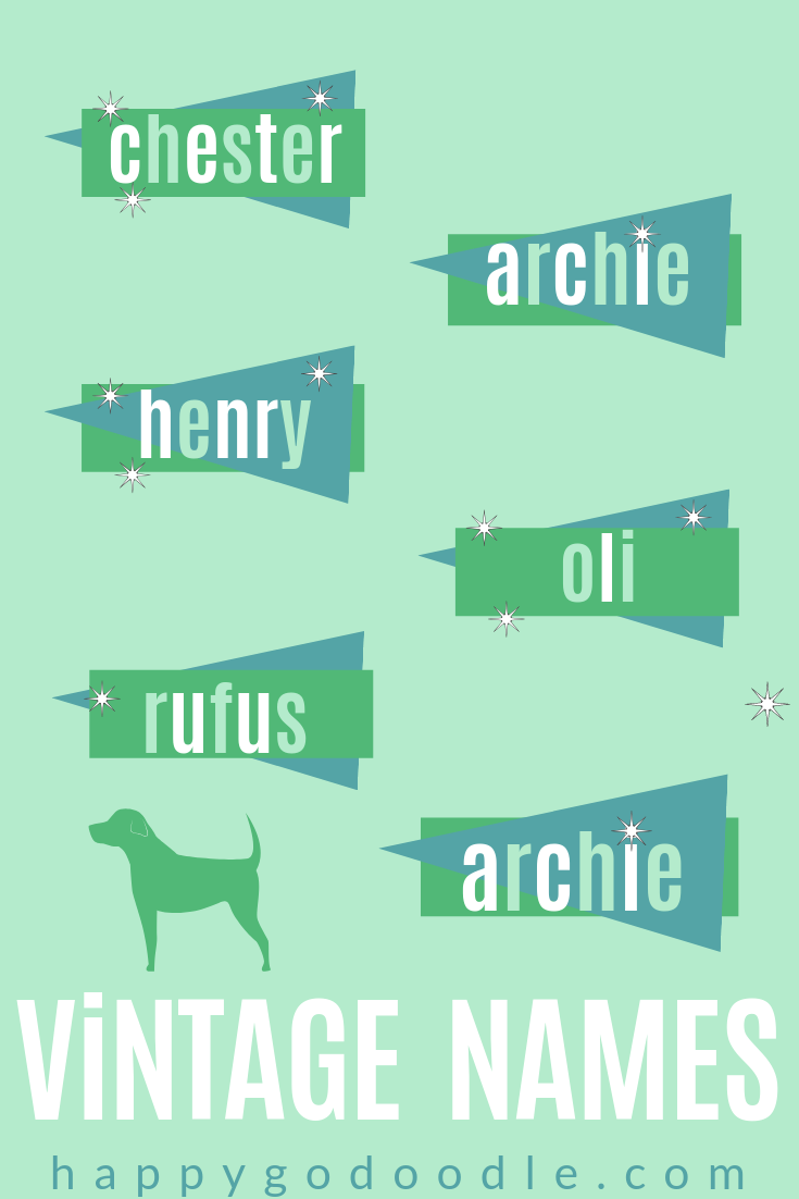 101 Old Fashioned Dog Names For Boy Puppy Perfection Happy Go