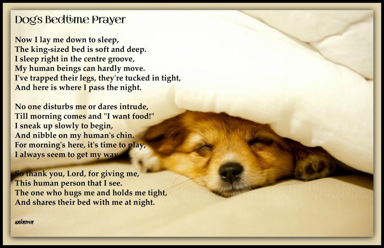 A Dog S Bedtime Prayer Bedtime Prayer Dogs Bedtime