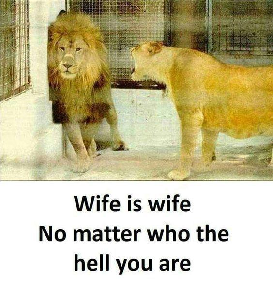 Wife Sayings