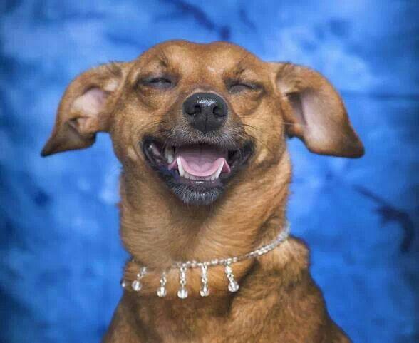 Pin By Eddie Lopez On Dogs Dog Adoption Kitten Adoption