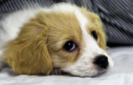 Dog Behavior Training To Housebreak Your Puppy