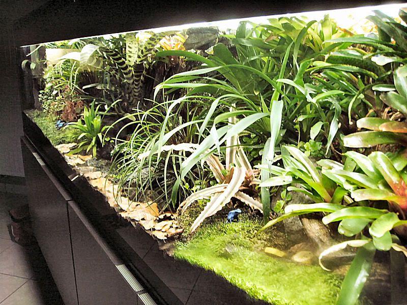 Pin on Dart frog vivarium