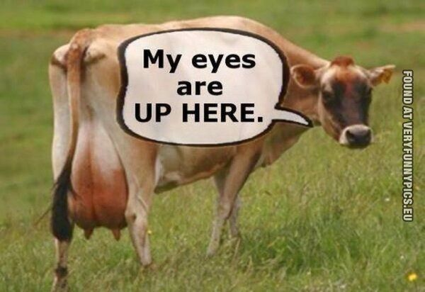 Click Here For More Eye Candy Cows Funny Cow Quotes Animal Captions