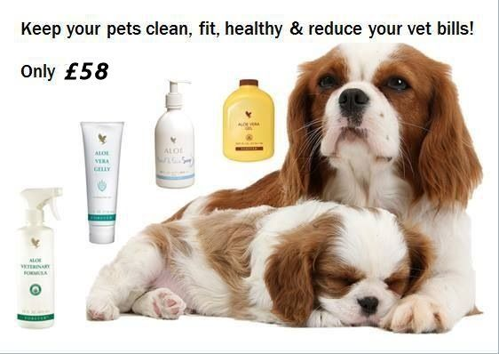 Keep You Pets Clean And Healthy For Only 58 Produtos Forever Aloe Vera Aloe