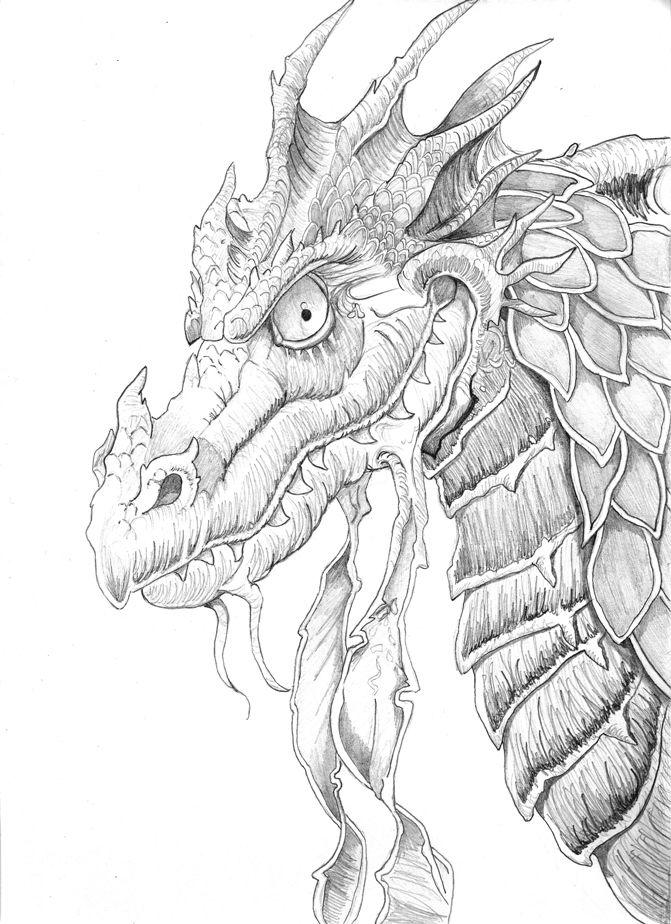 dragon head coloring for adults kleuren voor volwassen - Coloring Pages Dragons Fairies