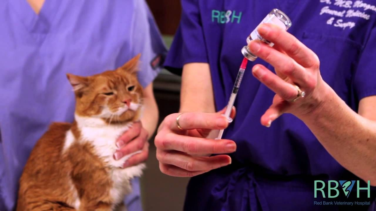Learn The Safest And Most Effective Way To Give Your Pet A