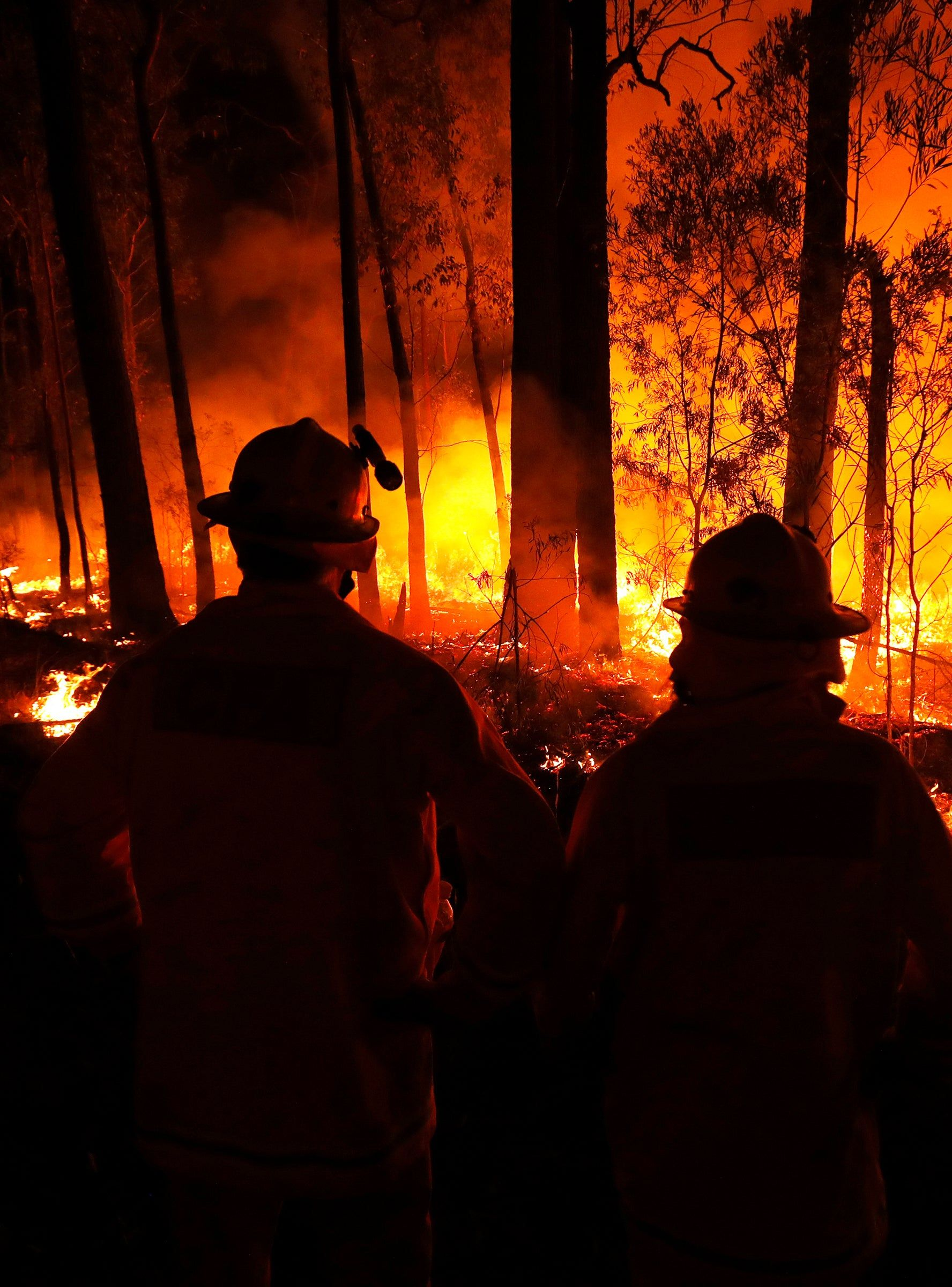 How To Help With Devastating Australia Fires in 2020
