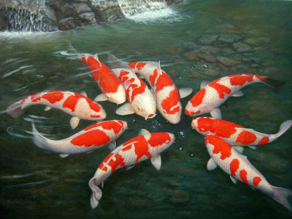 Koi fish pictures wallpaper water creatures pinterest for Rare koi fish