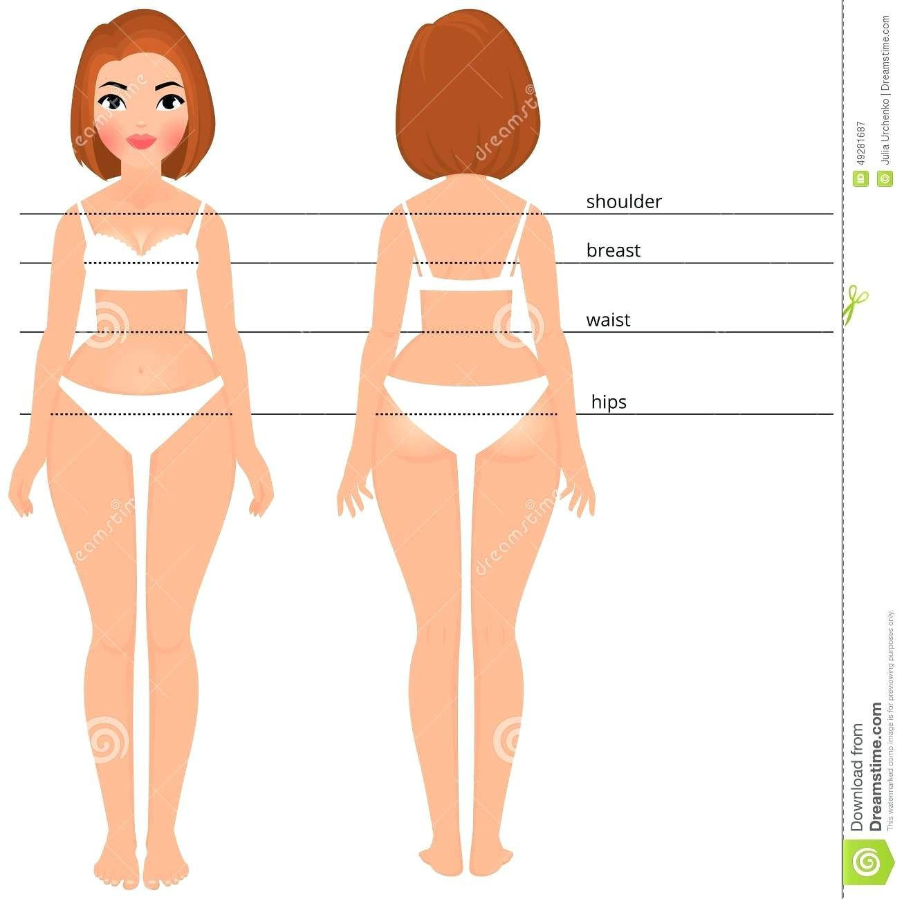 Map Of Female Body Organs Template