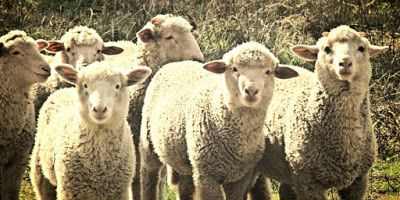 Pin By اسماء اصوات الحيوانات On اصوات Animals Blog Posts Lamb