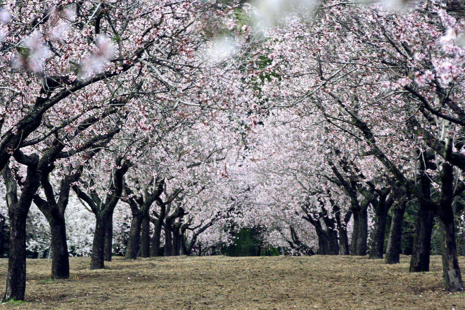 Quinta de los Molinos: Almendros en flor y grutas para pasear
