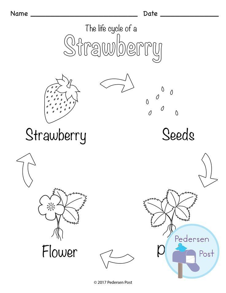 Strawberry Report Template Template, Students and Learning - spider diagram template