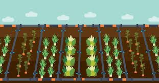 Image result for if you can't irrigate it don't plant it pictures