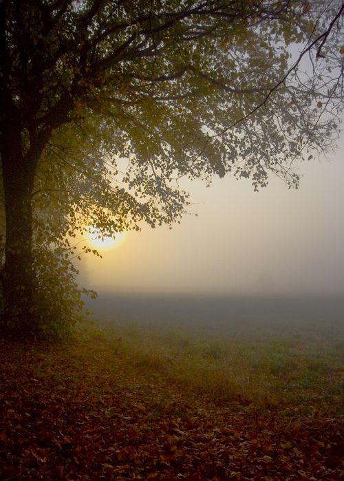 http://oldandshabby.tumblr.com/post/60400481505/3foldlaw-in-the-autumn-mist-by