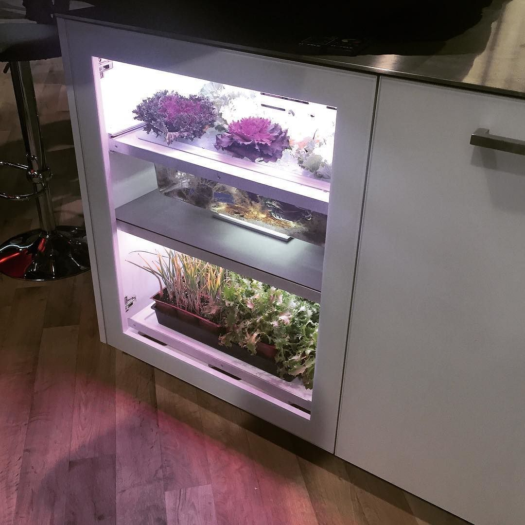 Led Kitchen Garden Year Around Counter Top Culinary Herb: You Can Grow Microgreens In Your Kitchen Cabinet Thanks To
