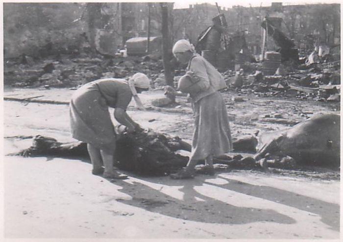 Фотографии оккупированных немцами земель и людей (45 фото ...