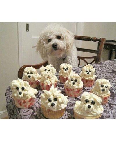dogcakes