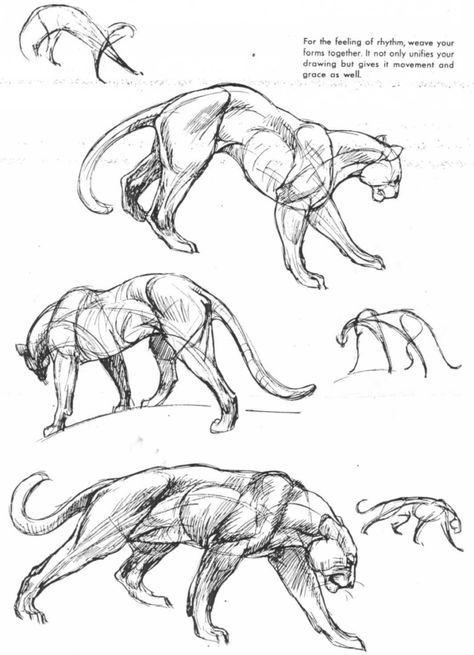 Panther Muscle Recherche Google Art Poses Pinterest Anatomy
